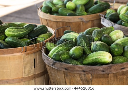 Bushels of cucumbers for sale at farmers market in Asheville North Carolina