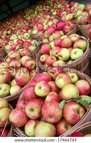 Bushels of Honey Crisp apples at a Farm Market