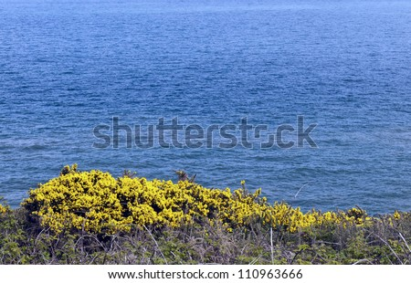 Bushes blooming in the spring off the coast of Ireland - stock photo