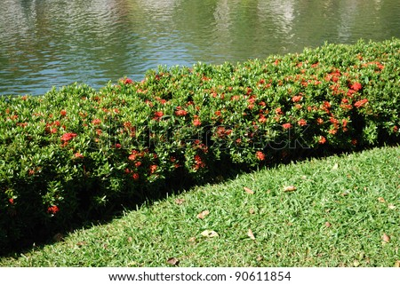 Bushes in a park - stock photo
