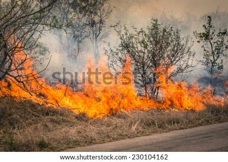 Bushfire burning at Kruger Park in South Africa - Disaster in bush forest with fire spreading in dry woods - stock photo