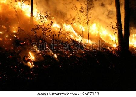 Bushfire/Wildfire closeup at night. Taken at a wildfire in 2007. - stock photo