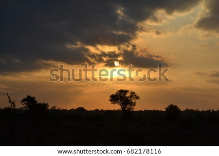 Bushveld Sunset