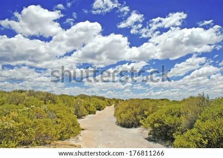 Bushwalking Track near Sydney in New South Wales, Australia - stock photo