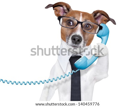 business dog with a tie and glasses listening carefully on the phone - stock photo