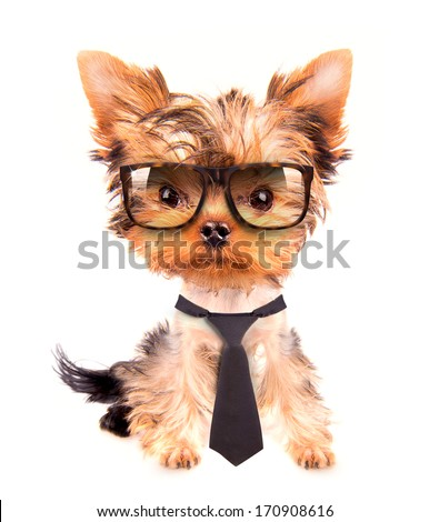 business dog with tie and glasses on white - stock photo