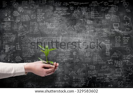 business idea concept on wall with hands holding green small plant  - stock photo
