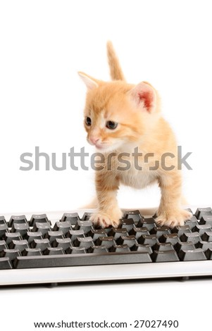Business kitten working ?n keyboard, isolated on white - stock photo