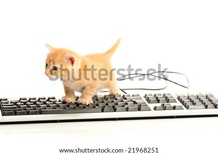 Business kitten working on keyboard, isolated on white