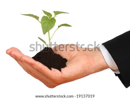 business men,  plant - stock photo