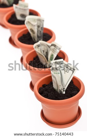 business series: growing money in the  flowerpot