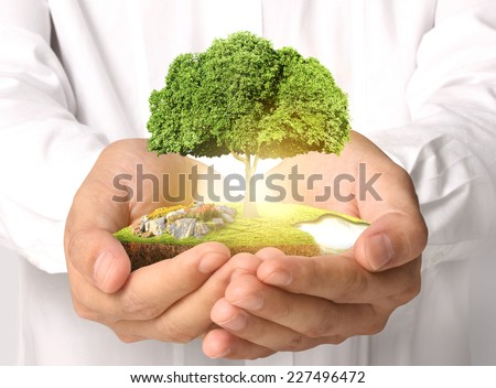 Businessman holding big tree sprouting  - stock photo