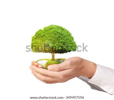 Businessman holding tree sprouting - stock photo