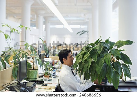 Businessman with Large Houseplant - stock photo