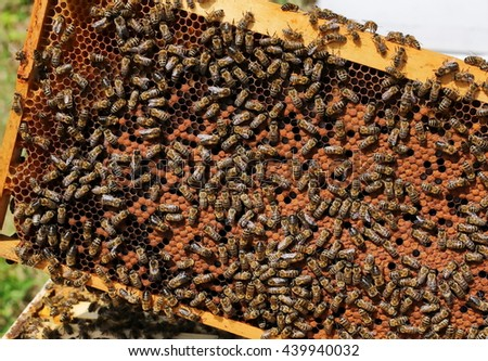 Busy bees, close up view of the working bees on honeycomb. Bees close up showing some animals and honeycomb structure - stock photo