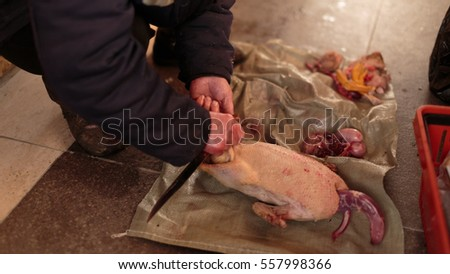 Butchering a Goose carcass close-up
