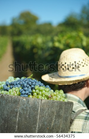 Butt full of grapes - stock photo