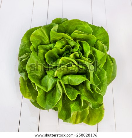 Butter lettuce salad isolated on white table - stock photo