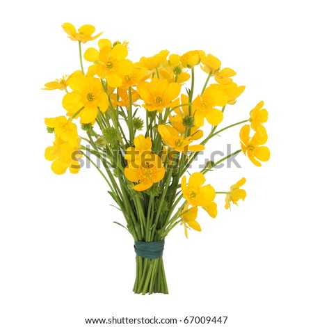 Buttercups tied in a bunch isolated over white background. - stock photo