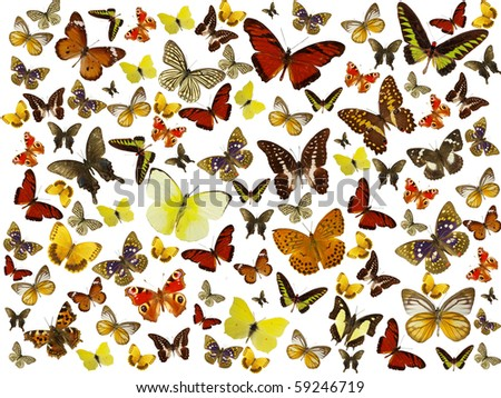 Butterflies background - stock photo