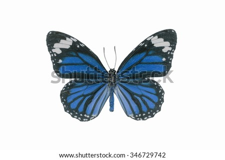 butterflies flying, isolated on white background