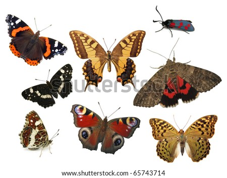 Butterflies isolated on white - stock photo