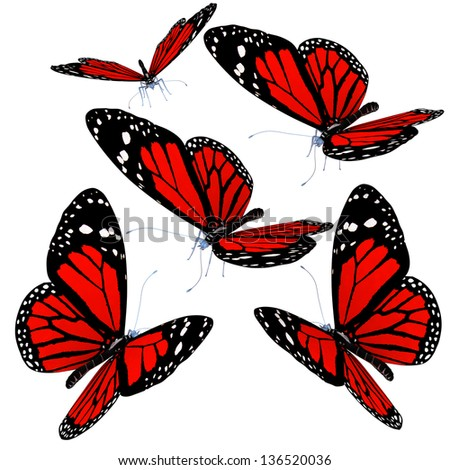 Butterflies isolated on white background - stock photo