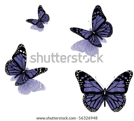 butterflies on a white background - stock photo