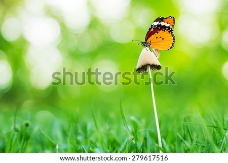 butterflies sitting on mushroom with green bokeh background