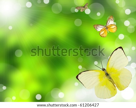 Butterflies with green blur background - stock photo