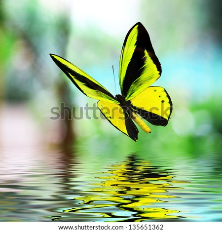Butterfly 15 - stock photo