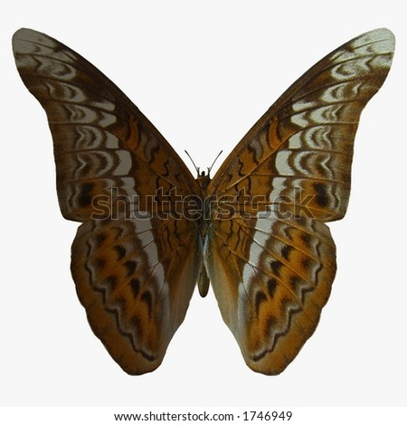 Butterfly-Admiral - stock photo