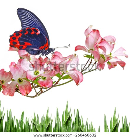 butterfly and flowers - stock photo