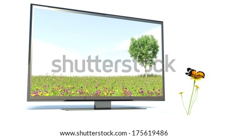 Butterfly and TV, nature