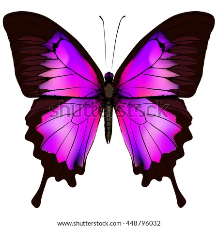 Butterfly. Beautiful pink and purple butterfly isolated on white background - stock photo