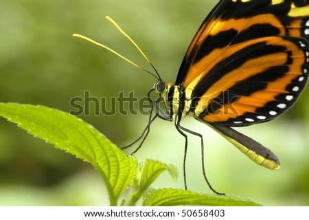 Butterfly chilling on a leaf - stock photo