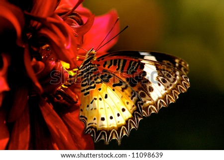 butterfly close up - stock photo