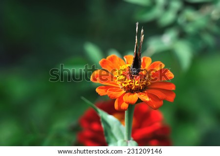 butterfly close-up - stock photo
