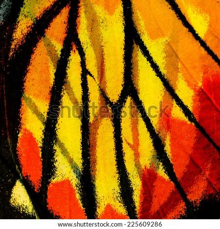 Butterfly, Closeup Painted Jezebel butterfly's wing.(Deilas hyparete) - stock photo