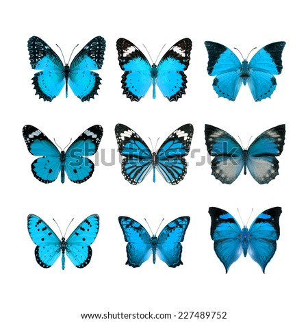 Butterfly, collection of Light Blue butterfly - stock photo