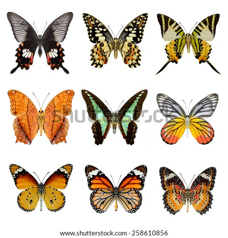 Butterfly collection ,set of lower wing profile butterflies  - stock photo