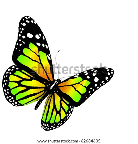 butterfly 3d render on white background