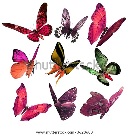 Butterfly Delight - stock photo