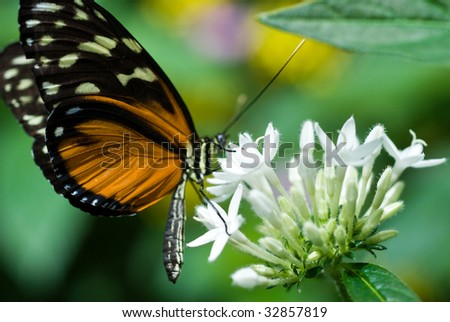 butterfly enjoying nectar from a flower - stock photo