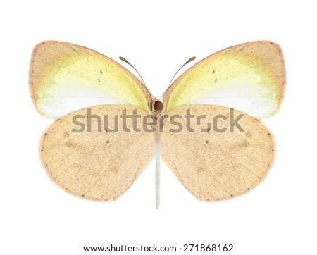 Butterfly Eurema elathea (female) (underside) on a white background - stock photo