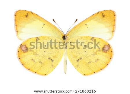 Butterfly Eurema lisa (female) (underside) on a white background - stock photo