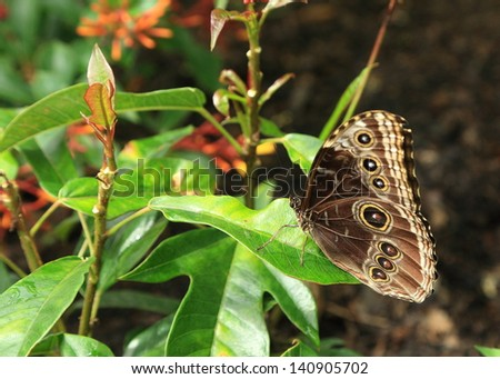 Butterfly feeding on flower bush