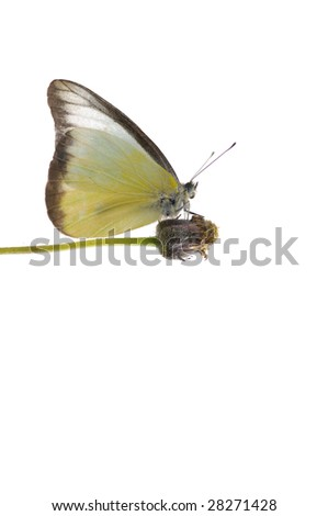butterfly feeding with flower - stock photo