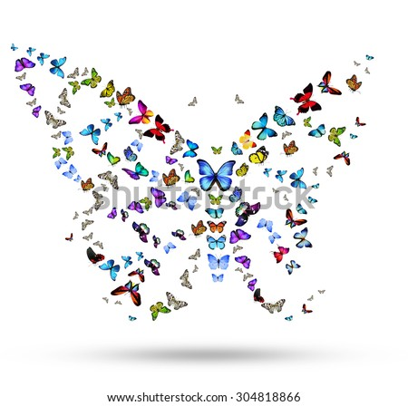 Butterfly from flying butterflies - stock photo