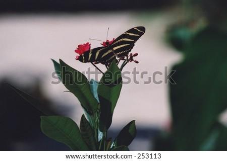 butterfly from st. maarten butterfly farm - stock photo